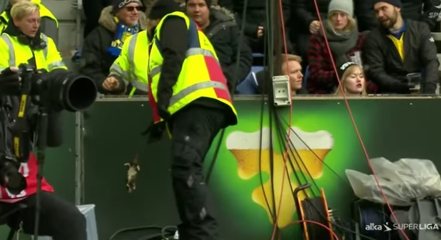 Derby de Copenhague : des supporters jettent des rats morts