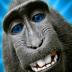 Portrait de MonkeyIsland