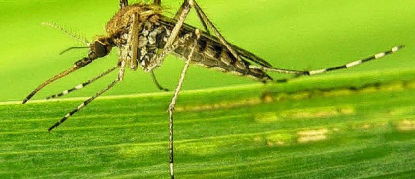 En raison de problèmes de distribution à cause du coronavirus, près de 400.000 personnes supplémentaires pourraient mourir du paludisme cette année