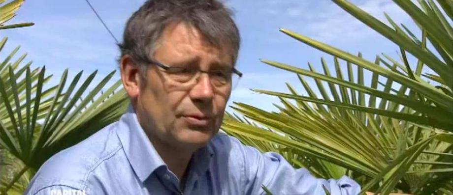 """Un intervenant de """"Capital"""" sur M6 compare un palmier avec un Africain et déclenche la colère les téléspectateurs - VIDEO"""
