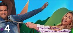 France 4 confie à Alex Goude et Juliette Sonet experte en animaux, un nouveau jeu chaque dimanche à 17h10 à partir de 2 septembre