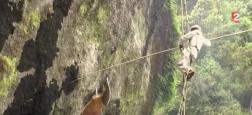 Népal : Les images impressionnantes des apiculteurs qui risquent leurs vies dans les montagnes sans aucune protection - VIDÉO