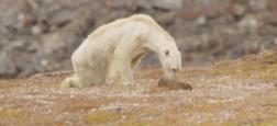 Tout de suite Morandini Live sur CNews - EXCLU: Un ancien cadre de France Télé dénonce - L'image d'un ours bouleverse le monde