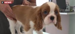 """Coronavirus - Une vétérinaire lance un appel aux propriétaires d'animaux: """"N'utilisez pas d'eau de javel pour nettoyer votre animal !"""""""