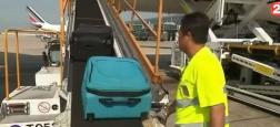 Vous n'imaginez pas une seconde ce qui se trouve aux côtés de nos valises dans les soutes des avions ! C'est plutôt surprenant - Regardez
