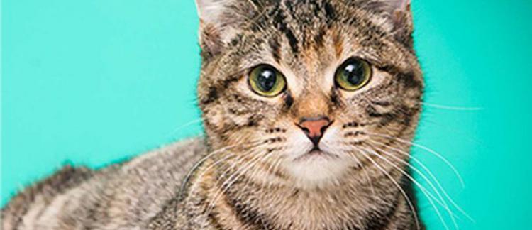 Jolie chatte rasée rose