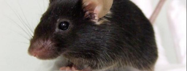 elle trouve une souris de 20 cm dans sa brique de soupe. Black Bedroom Furniture Sets. Home Design Ideas