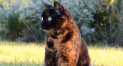 Coronavirus - L'école vétérinaire d'Alfort indique dans un communiqué avoir détecté pour la première fois en France un chat porteur du COVID19