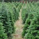 Le grand voyage du sapin de Noël